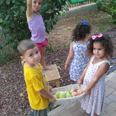 קטיפת תפוחים במעון2