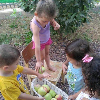 קטיפת תפוחים